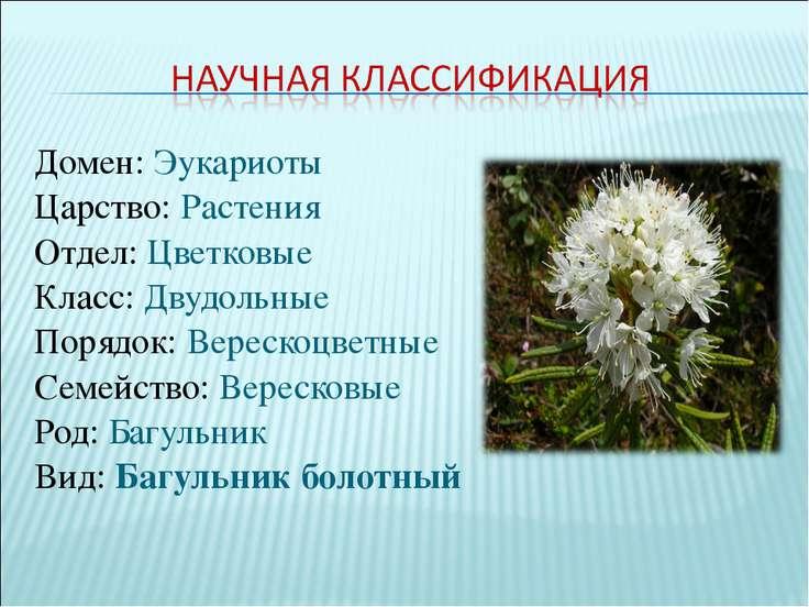 Домен:Эукариоты Царство:Растения Отдел:Цветковые Класс:Двудольные Порядок...