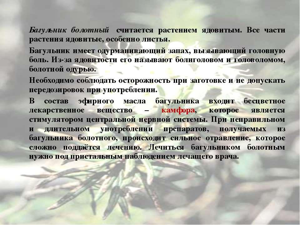 Багульник болотный считается растением ядовитым. Все части растения ядовитые...