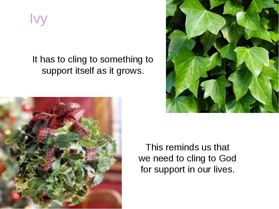 Ivy This reminds us that we need to cling to God for support in our lives. It...