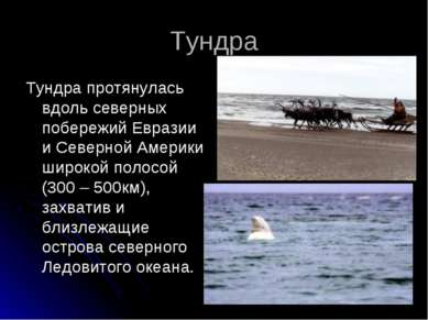 Тундра Тундра протянулась вдоль северных побережий Евразии и Северной Америки...