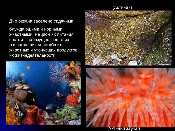 Дно океана заселено сидячими, блуждающими и норными животными. Рацион их пита...
