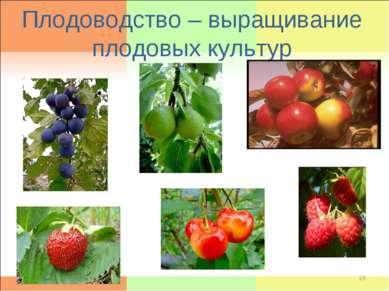 Плодоводство – выращивание плодовых культур *
