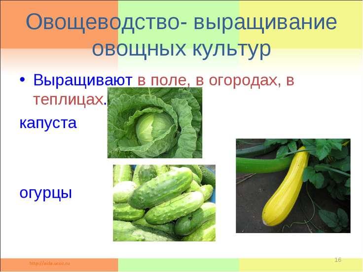 Овощеводство- выращивание овощных культур Выращивают в поле, в огородах, в те...