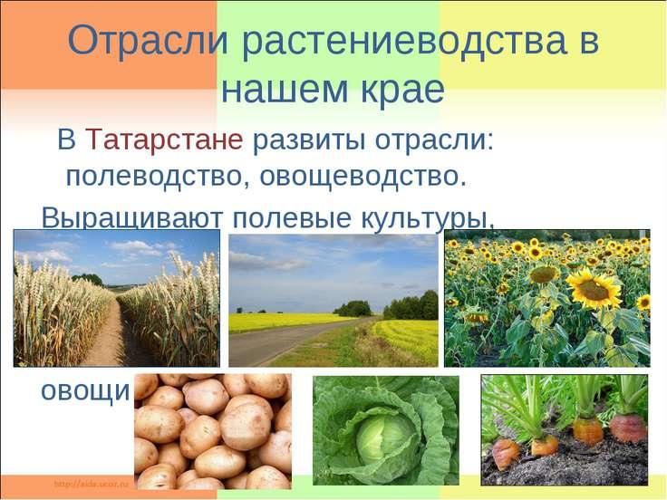 Отрасли растениеводства в нашем крае В Татарстане развиты отрасли: полеводств...