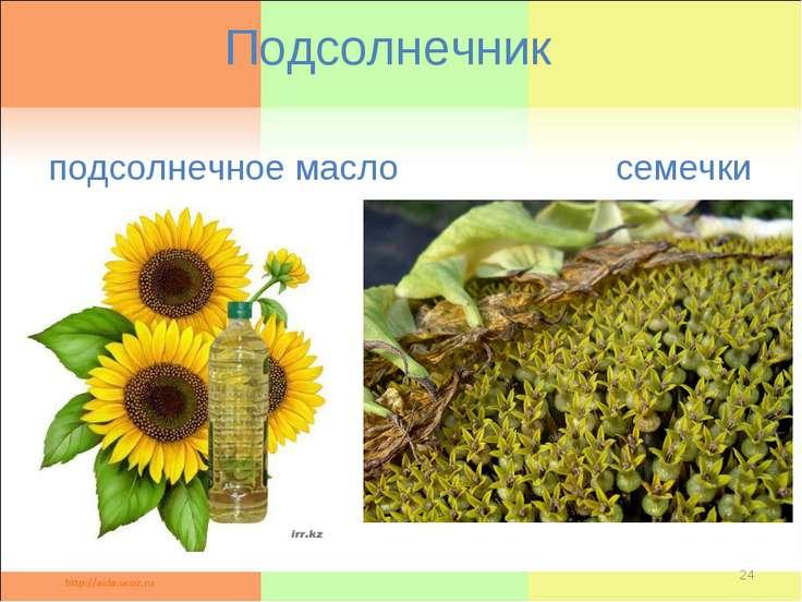 Подсолнечник подсолнечное масло семечки *