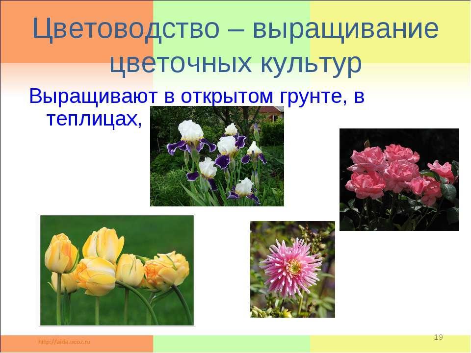 Цветоводство – выращивание цветочных культур Выращивают в открытом грунте, в ...