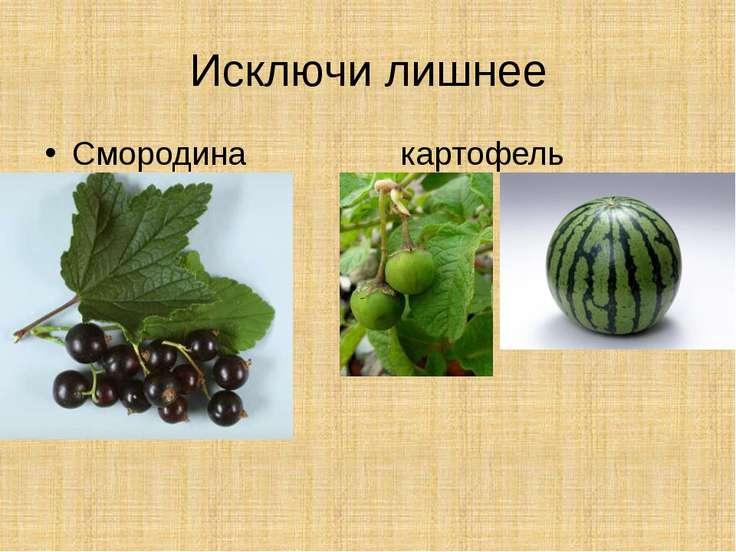 Исключи лишнее Смородина картофель арбуз