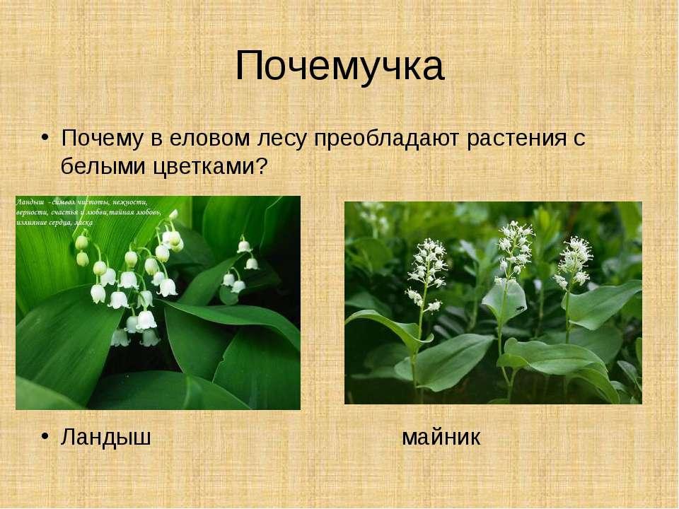 Почемучка Почему в еловом лесу преобладают растения с белыми цветками? Ландыш...