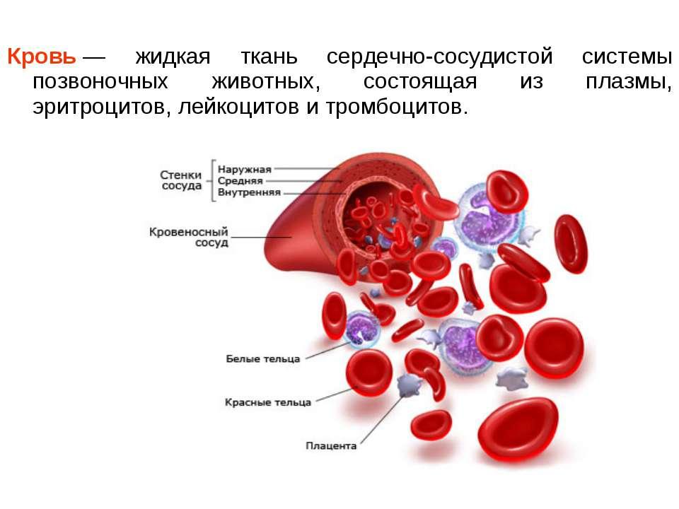 Кровь— жидкая ткань сердечно-сосудистой системы позвоночных животных, состоя...