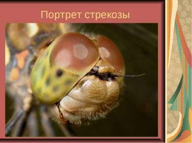 Портрет стрекозы