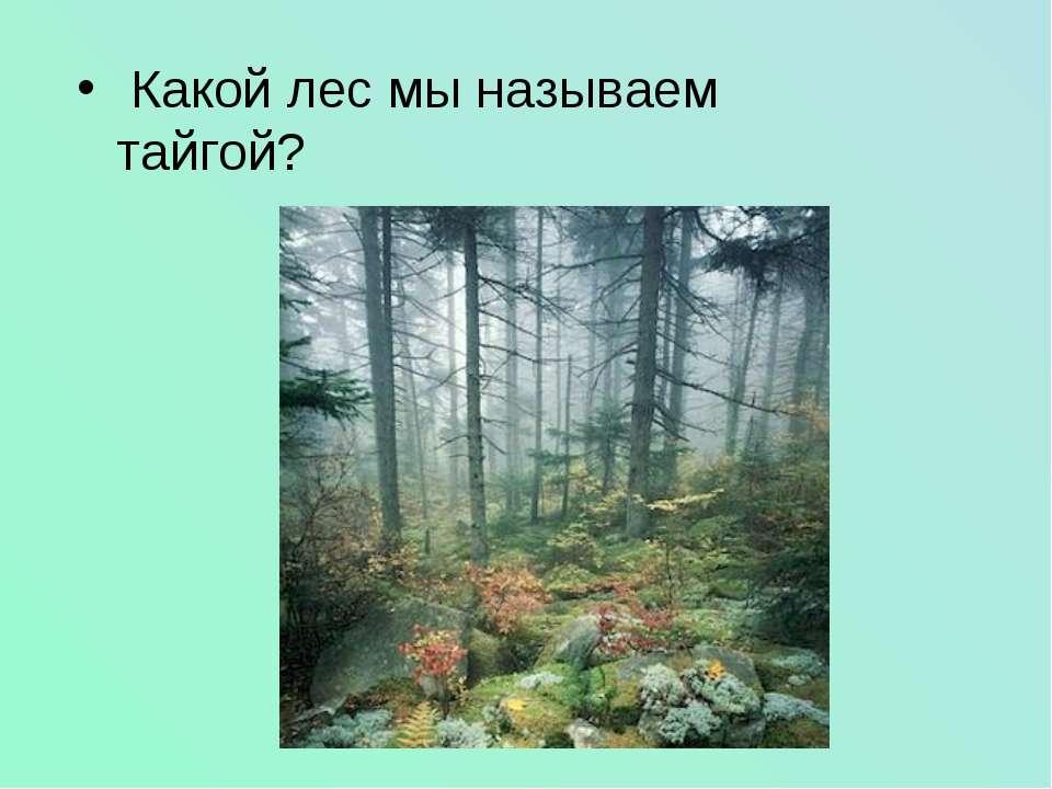 Какой лес мы называем тайгой?