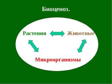 Биоценоз. Растения Животные Микроорганизмы