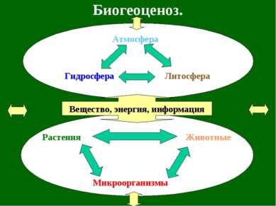 Биогеоценоз. Растения Животные Микроорганизмы Вещество, энергия, информация А...