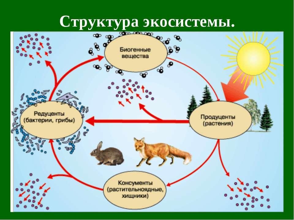 Структура экосистемы.