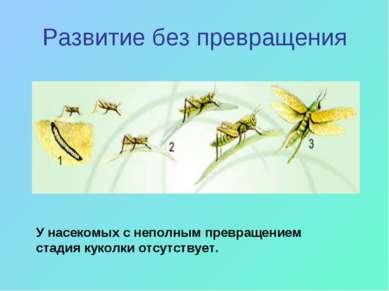Развитие без превращения У насекомых с неполным превращением стадия куколки о...