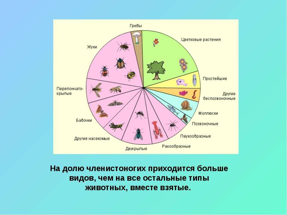 На долю членистоногих приходится больше видов, чем на все остальные типы живо...