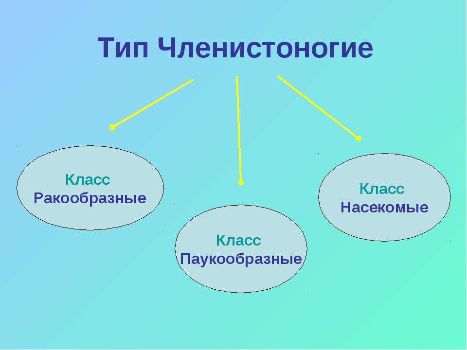 Тип Членистоногие Класс Паукообразные Класс Ракообразные Класс Насекомые