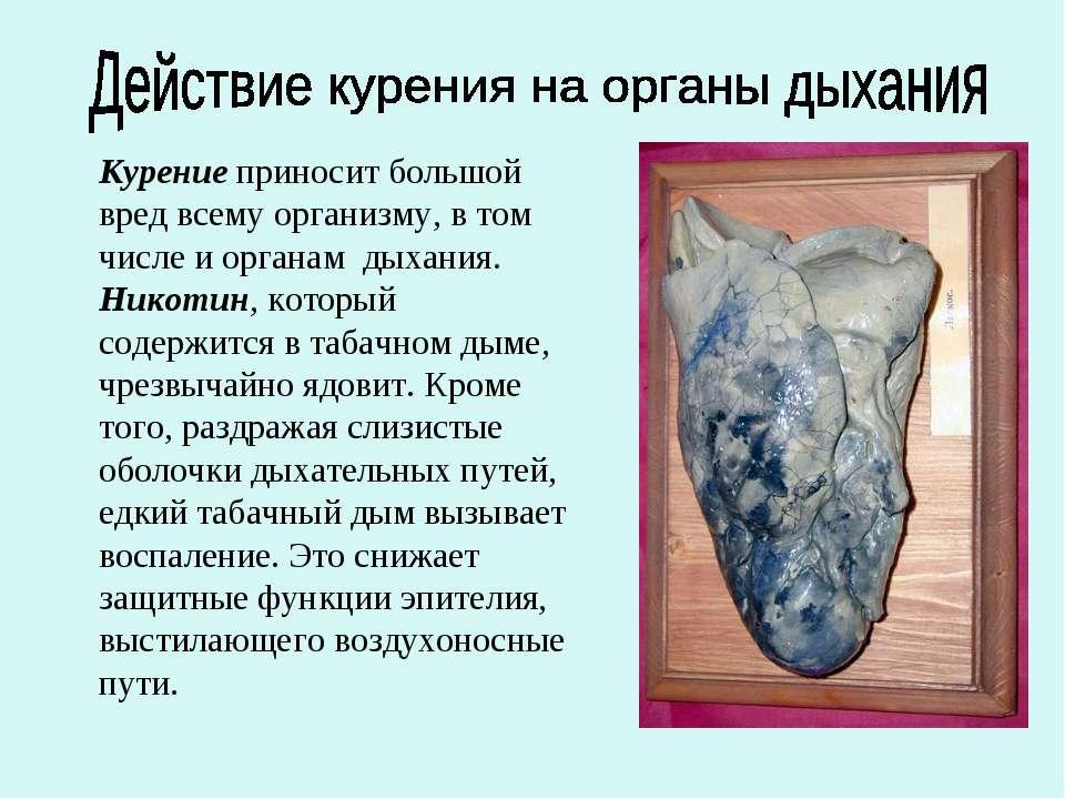Курение приносит большой вред всему организму, в том числе и органам дыхания....