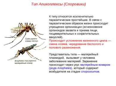 К типу относятся исключительно паразитические простейшие. В связи с паразитич...