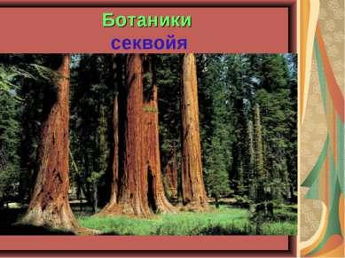 Ботаники секвойя