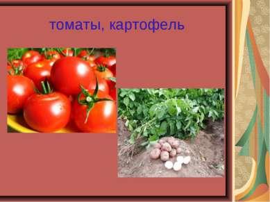томаты, картофель