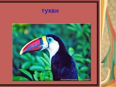 тукан