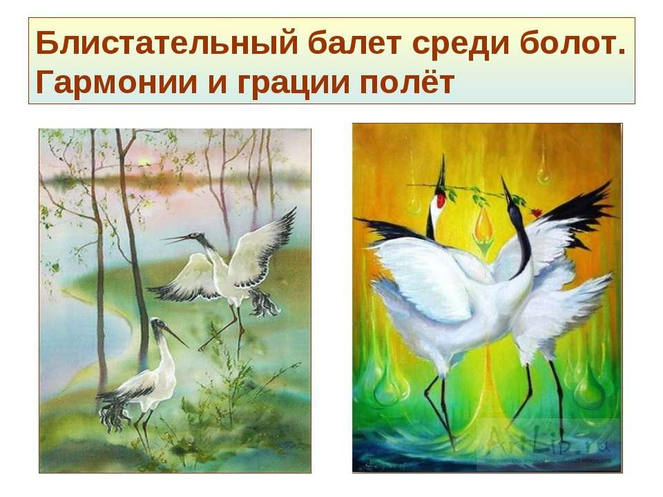 Блистательный балет среди болот. Гармонии и грации полёт
