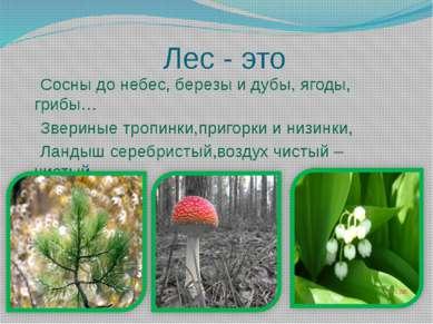 Лес - это Сосны до небес, березы и дубы, ягоды, грибы… Звериные тропинки,приг...