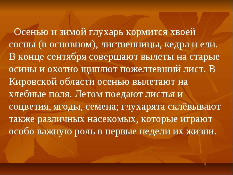 Осенью и зимой глухарь кормится хвоей сосны (в основном), лиственницы, кедра ...