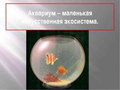 Аквариум – маленькая искусственная экосистема.