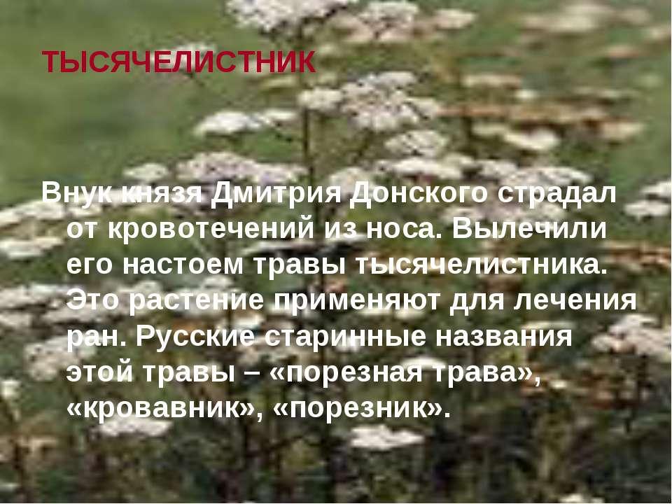 ТЫСЯЧЕЛИСТНИК Внук князя Дмитрия Донского страдал от кровотечений из носа. Вы...