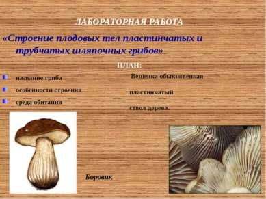 ЛАБОРАТОРНАЯ РАБОТА «Строение плодовых тел пластинчатых и трубчатых шляпочных...