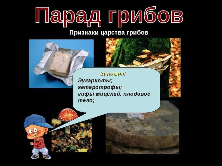 Признаки царства грибов Трутовик Мукор Запомни! Эукариоты; гетеротрофы; гифы-...