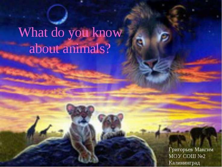 What do you know about animals? Григорьев Максим МОУ СОШ №2 Калининград