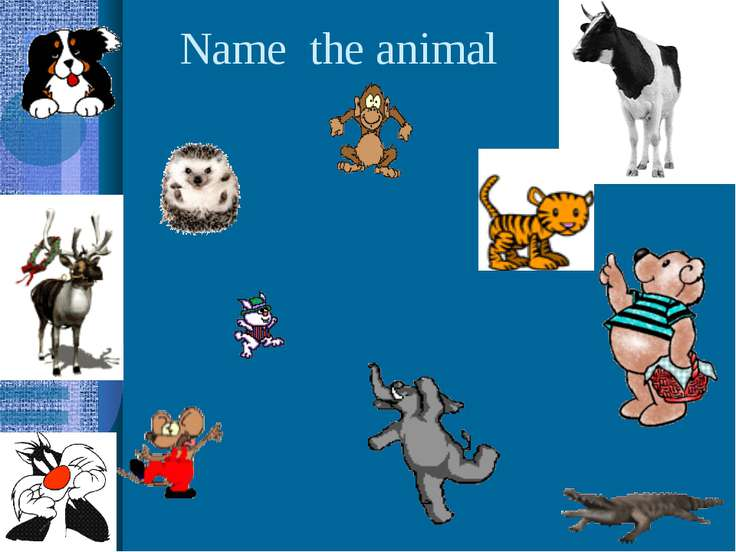Name the animal