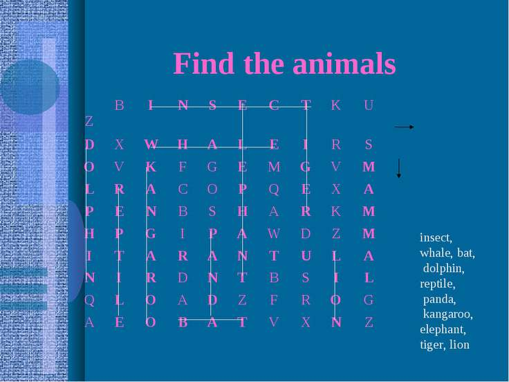 Find the animals insect, whale, bat, dolphin, reptile, panda, kangaroo, eleph...