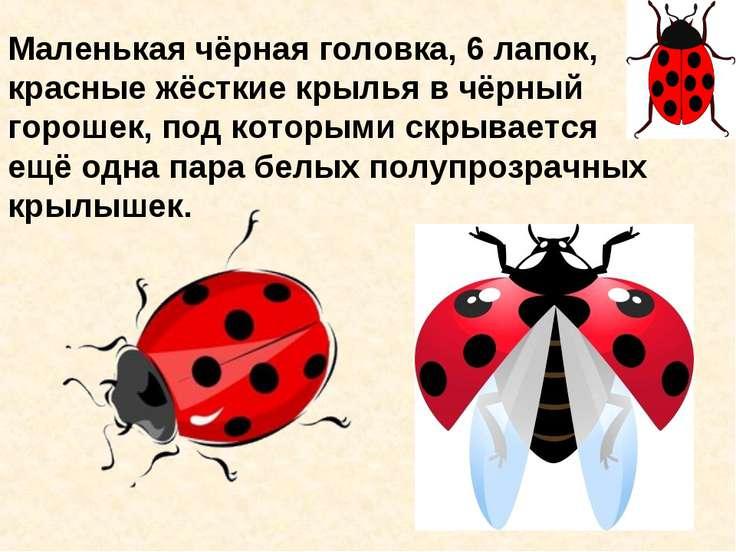 Маленькая чёрная головка, 6 лапок, красные жёсткие крылья в чёрный горошек, п...