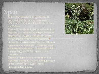 Хрен. ХРЕН, (Armoracia), род многолетних растений семейства крестоцветных (ка...