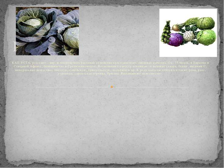 Капуста. КАП УСТА, род одно-, дву- и многолетних растений семейства крестоцве...