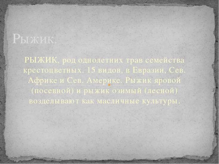 РЫЖИК, род однолетних трав семейства крестоцветных. 15 видов, в Евразии, Сев....