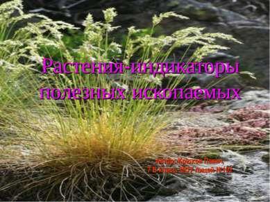 Растения-индикаторы полезных ископаемых Автор: Крюков Павел, 7 Б класс, МОУ л...