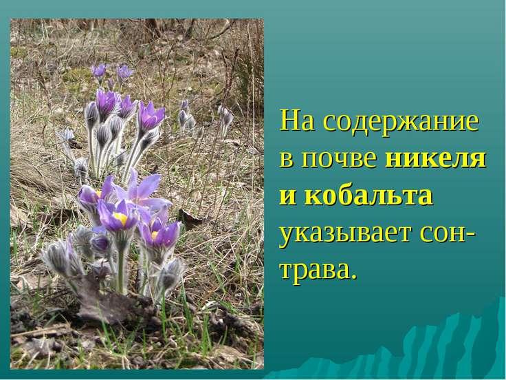 На содержание в почве никеля и кобальта указывает сон-трава.