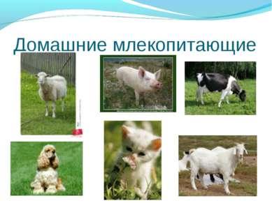 Домашние млекопитающие