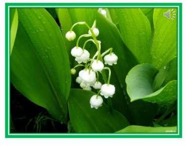 Цветёт он майскою порой, Его найдёшь в тени лесной: На стебельке, как бусы в ...