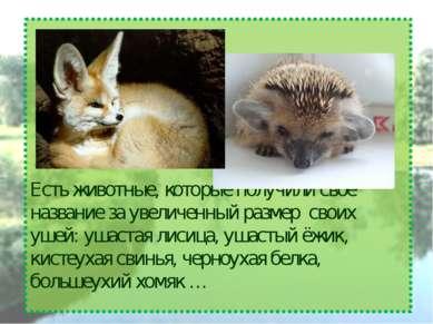 Есть животные, которые получили своё название за увеличенный размер своих уше...