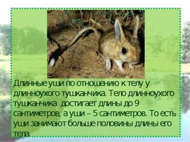 Длинные уши по отношению к телу у длинноухого тушканчика. Тело длинноухого ту...