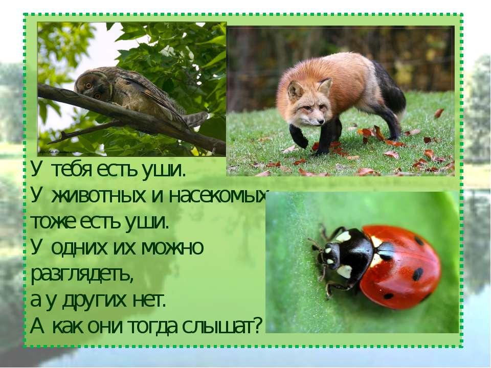 У тебя есть уши. У животных и насекомых тоже есть уши. У одних их можно разгл...