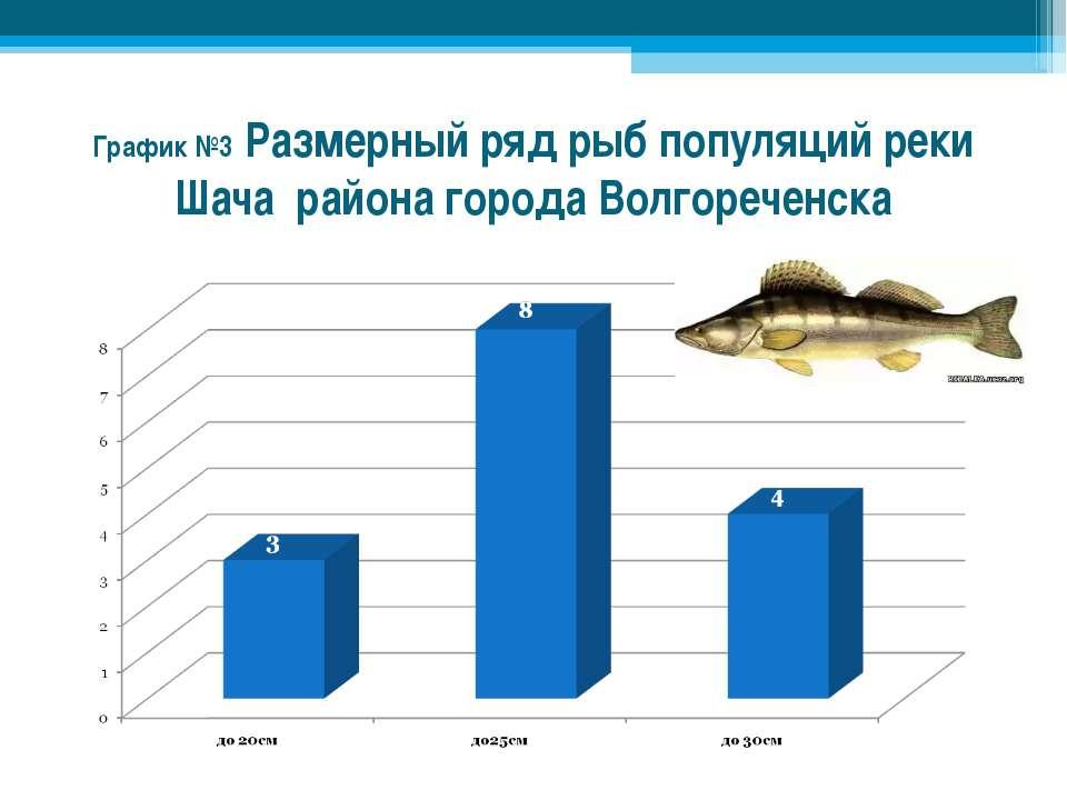 График №3 Размерный ряд рыб популяций реки Шача района города Волгореченска