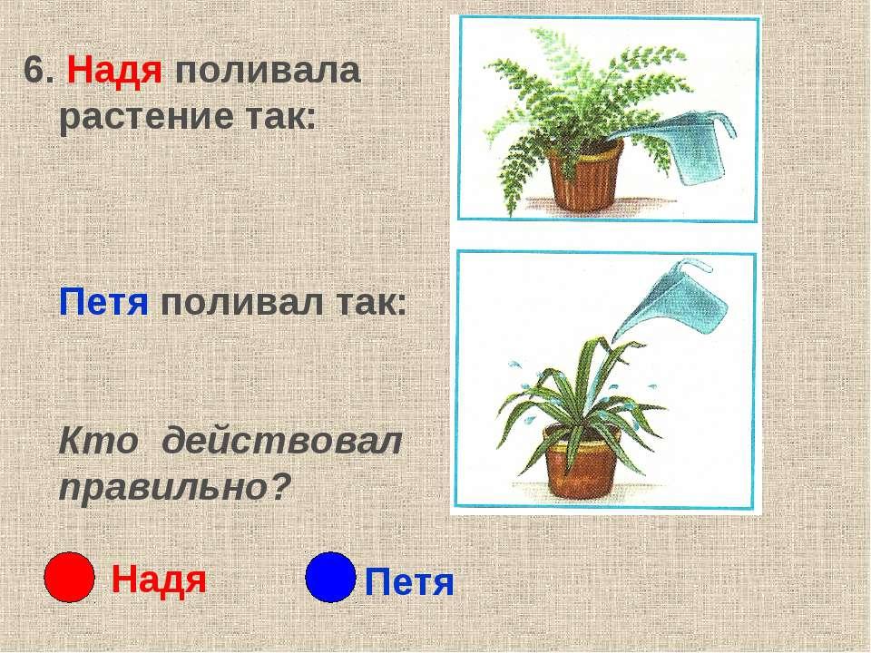 6. Надя поливала растение так: Петя поливал так: Кто действовал правильно? На...