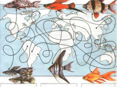 Южная Америка Сев. Америка Южная Америка Южная Америка Азия, Китай Азия